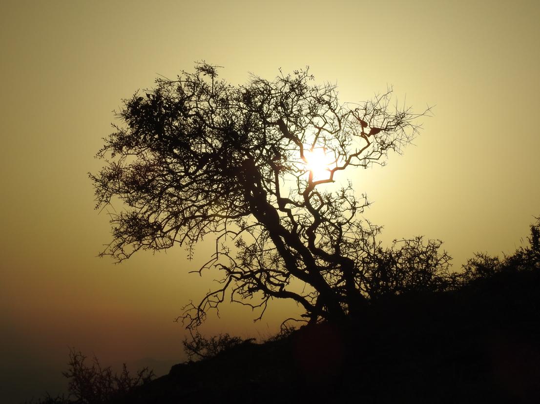 Toprağında Bir Ağaç