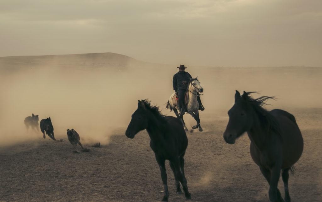 www.cekergezer.com ÇekerGezeR Hakan Aydın Yılkı Atları