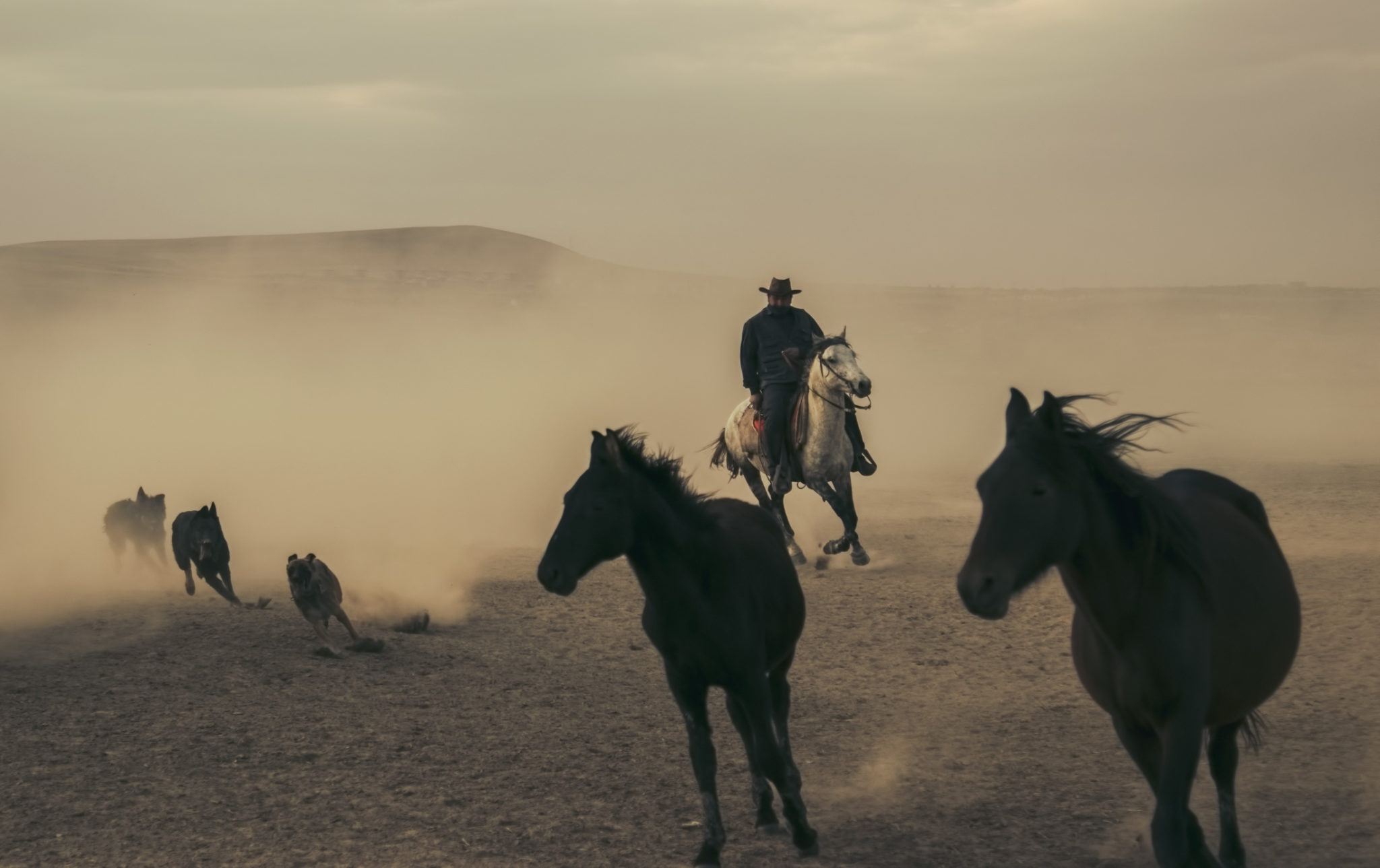 Yılkı Atları Fotoğrafları www.cekergezer.com ÇekerGezeR Hakan Aydın