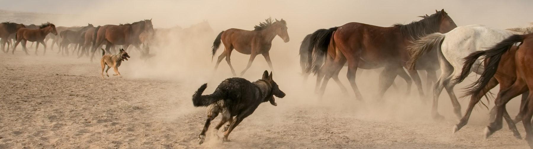 Tanıtım için sınırları zorlamak Yılkı Atları Fotoğrafları www.hakanaydın.com.tr ÇekerGezeR Hakan Aydın
