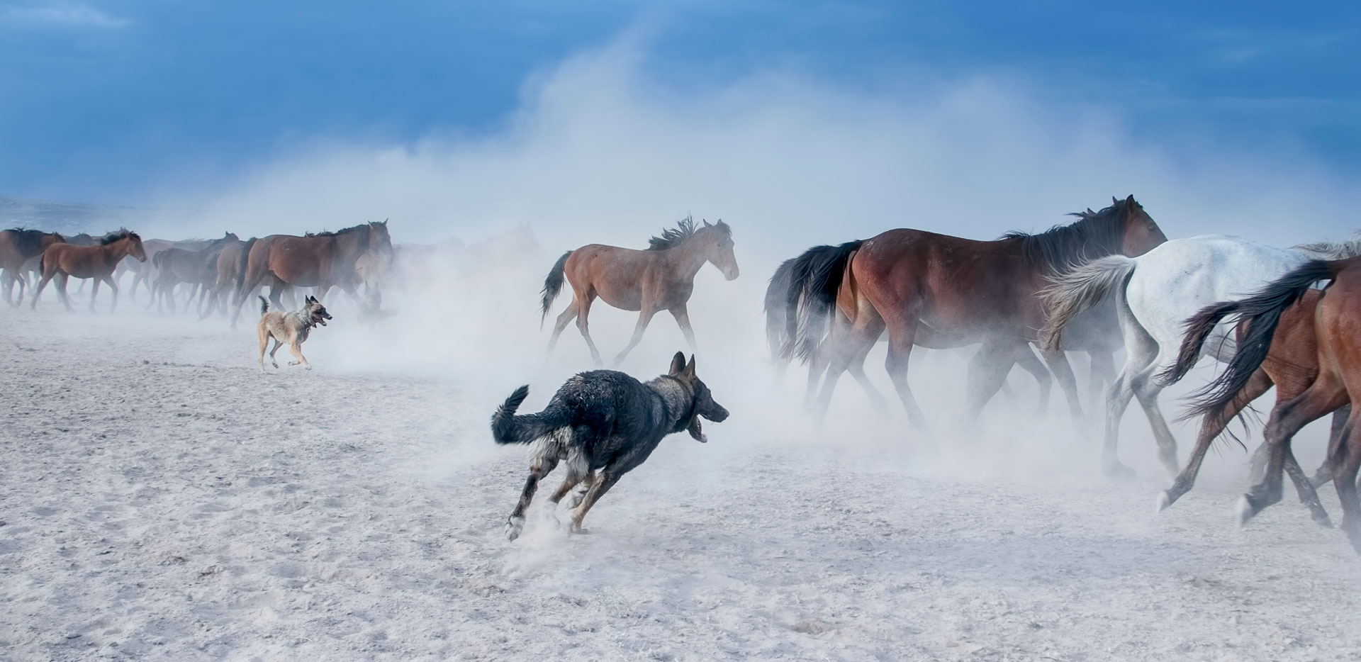 Yılkı Atları Fotoğrafları www.cekergezer.com Çekergezer Hakan Aydın Gezgin Fotoğrafçı