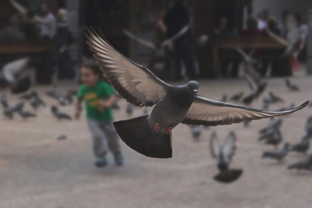 Hamamönü Fotoğrafları Ankara Türkiye Çekergezer Hakan Aydın www.cekergezer.com