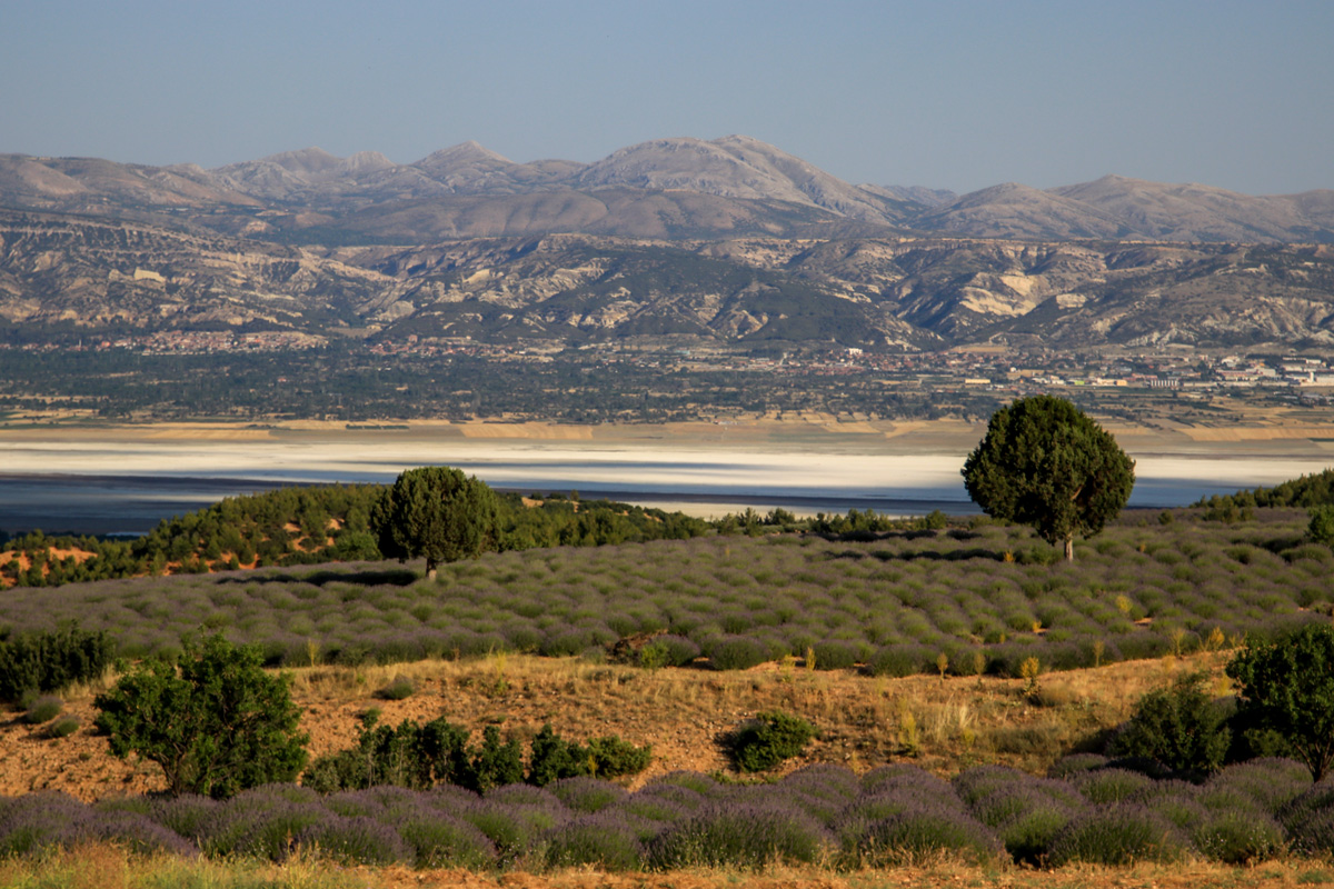 Lavanta Bahçeleri Lavanta Kokulu Köy Lavanta Tarlası Isparta Kuyucak www.cekergezer.com
