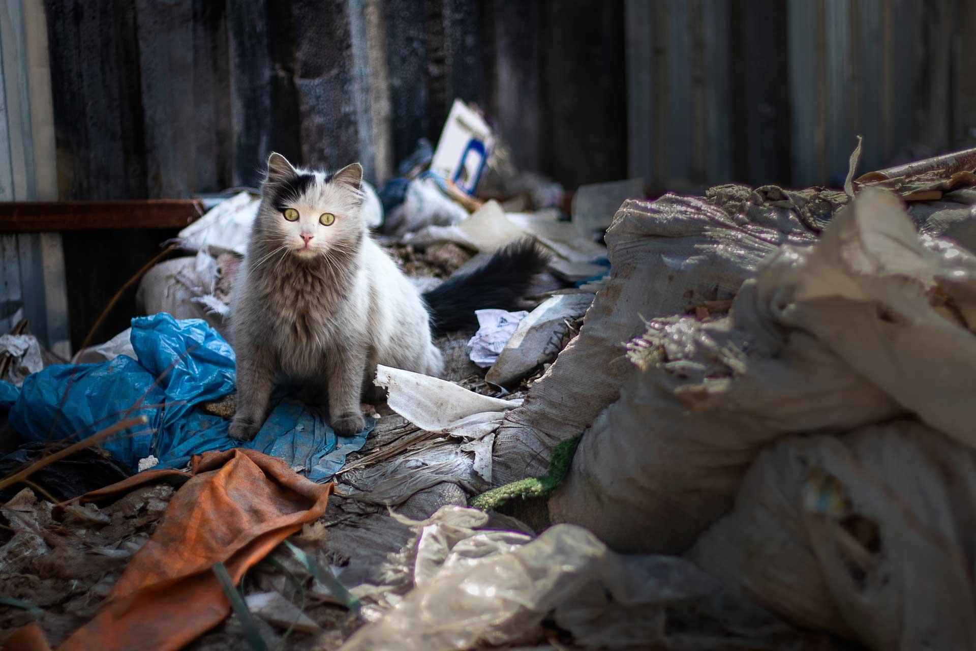 Çöp Kedisii Ankara Fotoğrafları Ankara Sokaklarından Resimler Gezgin Fotoğrafçı Çekergezer Hakan Aydın Ankara Fotoğrafları