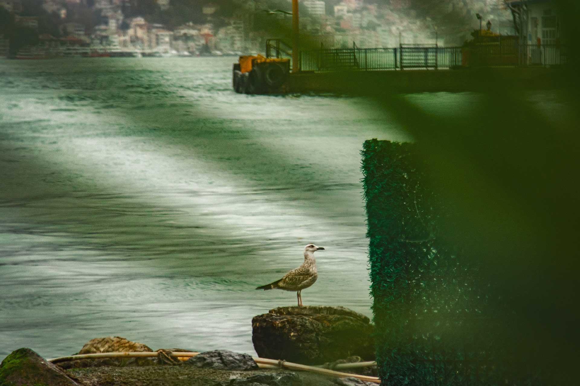 İstanbul Fotoğrafları Çekergezer Hakan Aydın Fotoğrafları www.cekergezer.com