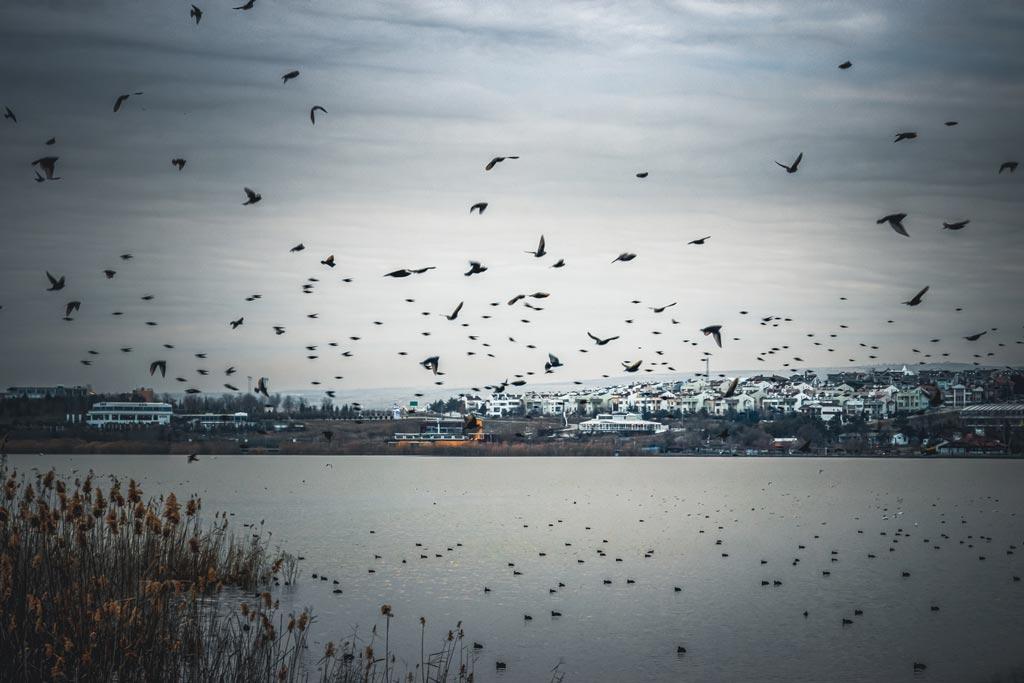 Mogan Gölü ve Kuşlar