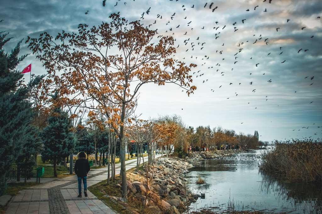 Mogan Gölü Sazlık ve Kuşlar