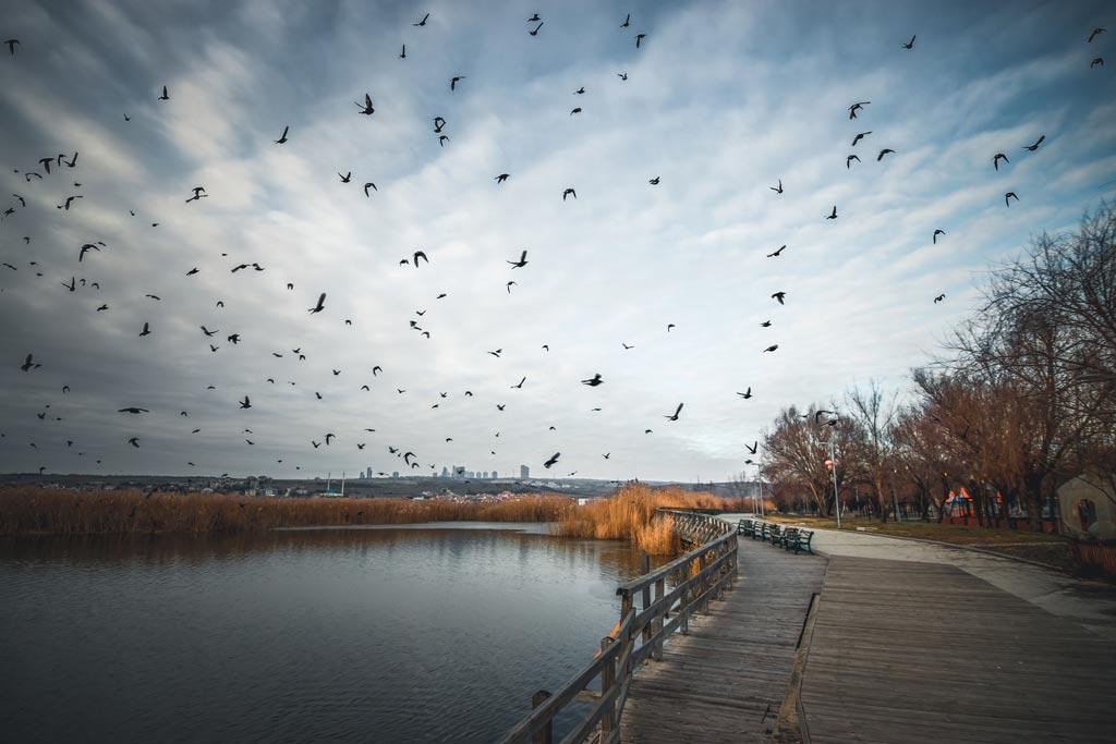 Mogan Gölü Uçan kuşlar