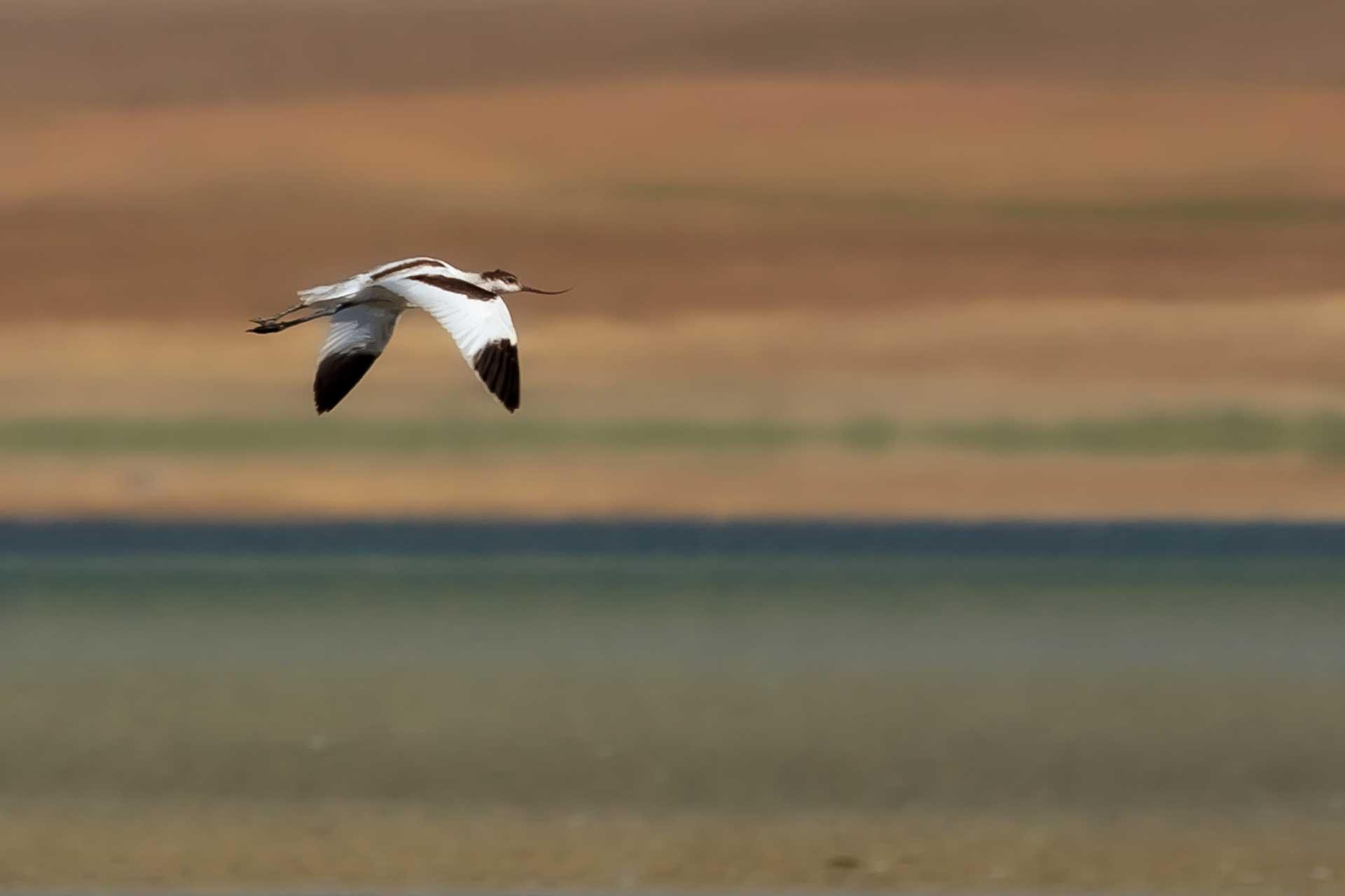 Flamingolar neden tek ayak üzerinde dururlar. Çekergezer Hakan Aydın fotoğrafları. Gezgin Fotoğrafçı