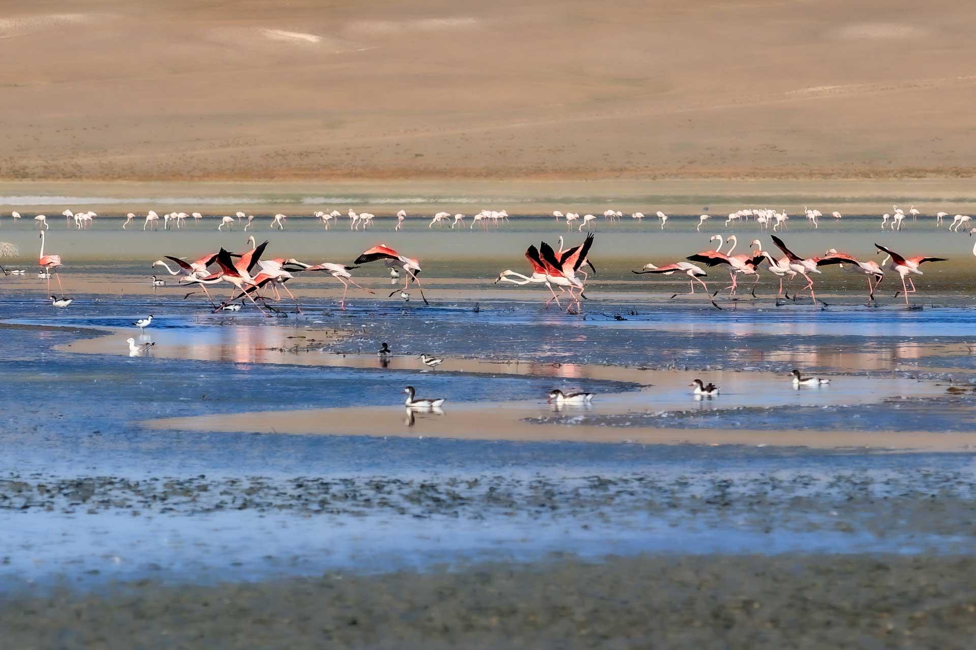 Flamingolar Flamingo Fotoğrafları Çekergezer Hakan Aydın Fotoğrafları Flamingo Resimleri