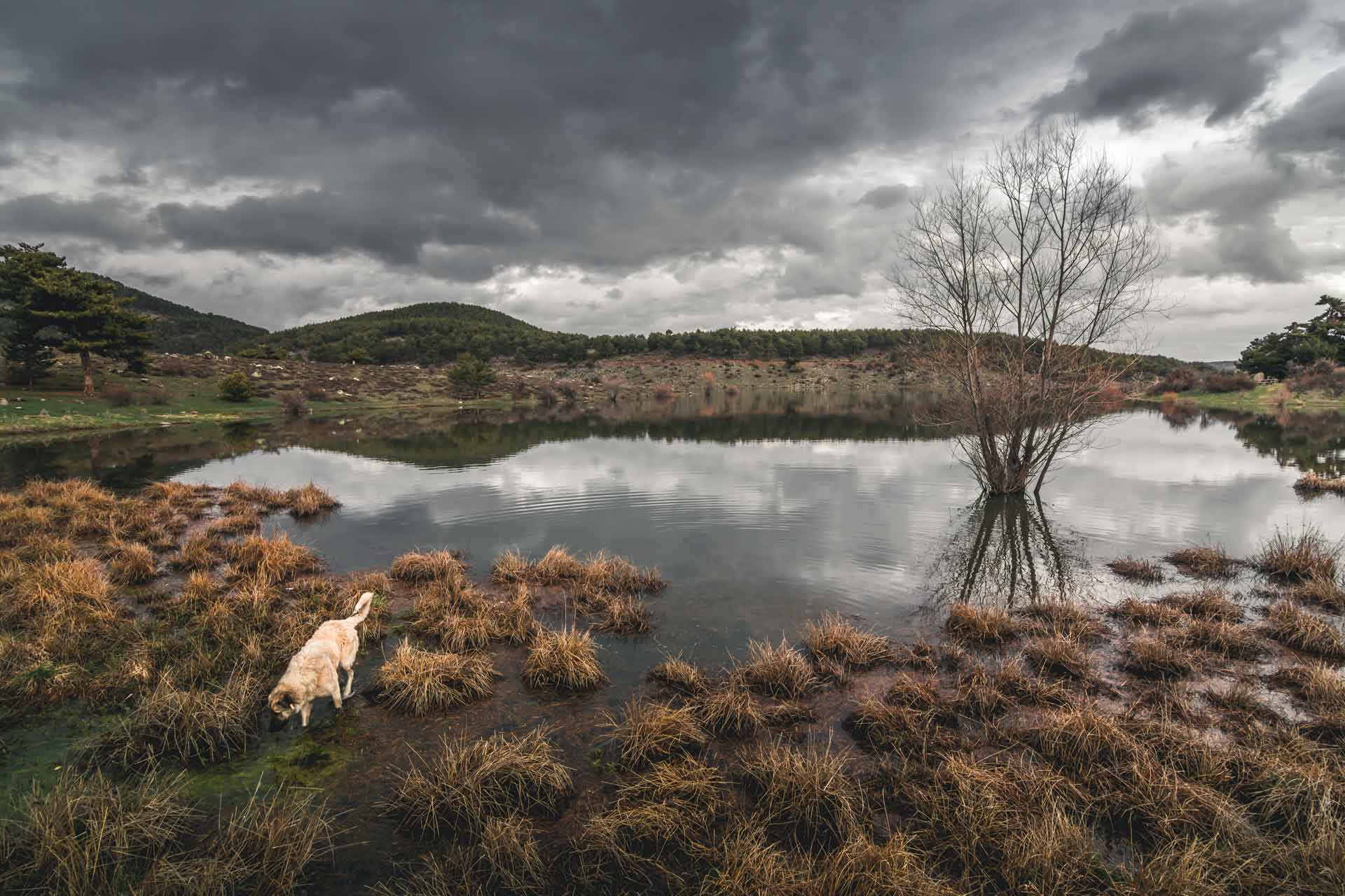 Sorgun Göleti Tabiat Parkı Sorgun Göleti Kamp Alanı Sorgun Göleti Mangal Sorgun Göleti çadır Sorgun Göleti fotoğrafları Çekergezer Hakan Aydın